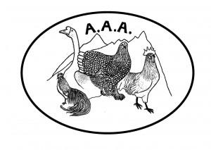 polli (1)