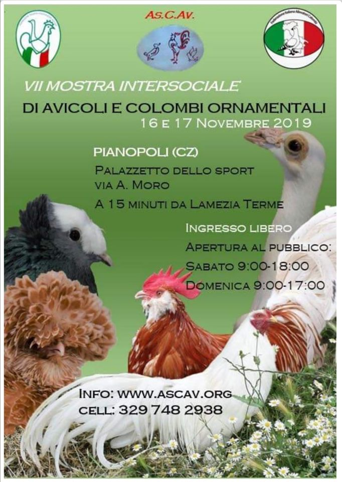 Mostra Intersociale As.C.Av. 16.11.2019